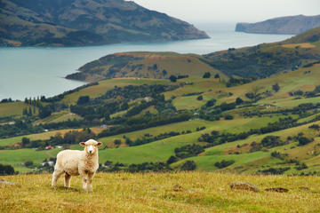 Shore Excursions in New Zealand