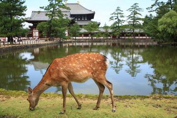 Deer Park (Nara Park)