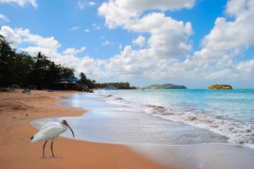 Cas en Bas Beach, St. Lucia