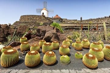 Cactus Gardens (Jardin De Cactus)