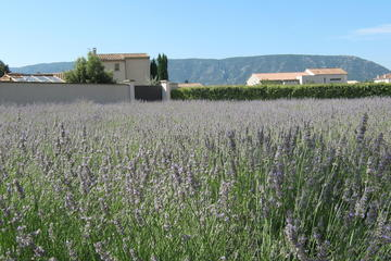 Coustellet Lavender Museum, Avignon, France