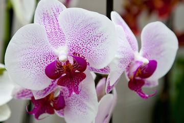 Jardins Akatsuka (Akatsuka Orchid Gardens)