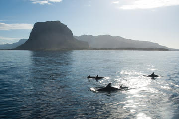 Dolphin Encounters in Mauritius