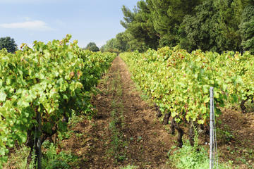 Fronton Wine Region, Midi-Pyrénées, France