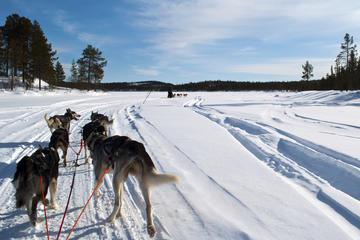 Winter Adventures in Lapland