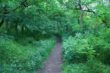 Vienna Woods (Wienerwald)