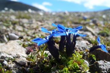 Arctic-Alpine Botanic Garden (Botaniske Hage)