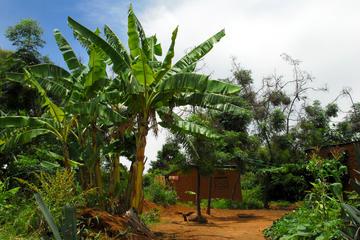 Tengeru Village