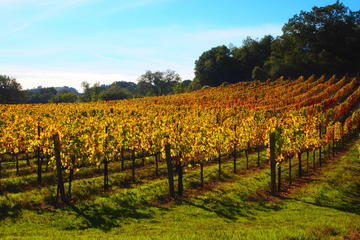 Wine Country Day Trips from San Francisco