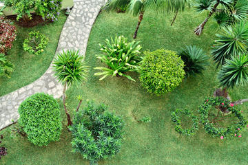 Palm Groves Garden (Gibbons Garden)