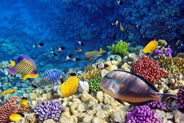 Careless Reef