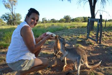 The Best Kangaroo Sanctuary Tours Trips Tickets Alice Springs - Kangaroo sanctuary alice springs