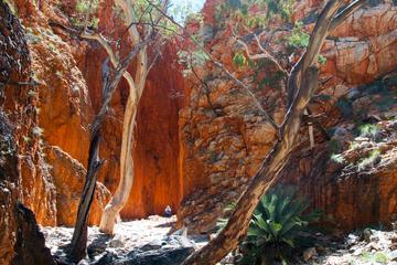 Standley Chasm (Angkerle), Alice Springs