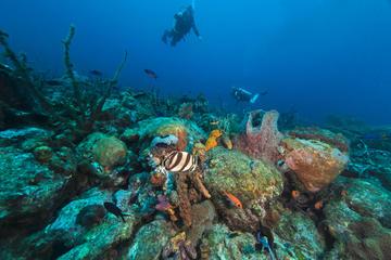 Cades Reef, Antigua & Barbuda