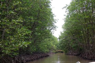 Can Gio Mangrove Biosphere Reserve