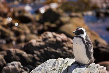 Stoney Point Penguin Colony