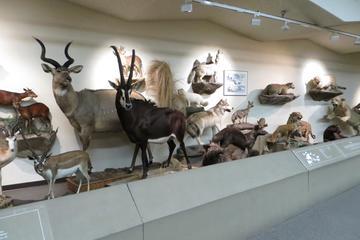 Museu de História Natural de Las Vegas