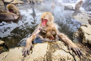 Visiting the Nagano Snow Monkeys from Tokyo
