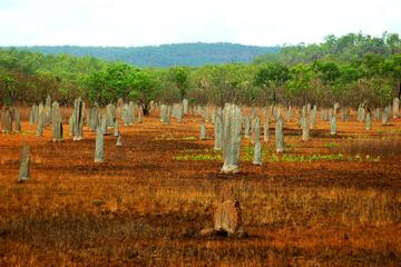 Magnetic Termite Mounds, Darwin