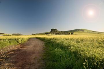 Swartland Wine Route