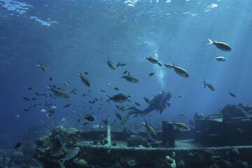 Tugboat Wreck, Curacao