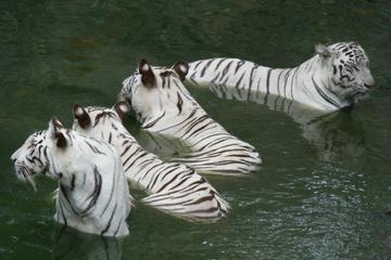 Arignar Anna Zoological Park, Tamil Nadu