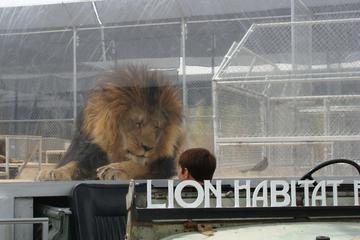 Lion Habitat Ranch