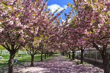 Brooklyn Botanic Garden, Brooklyn