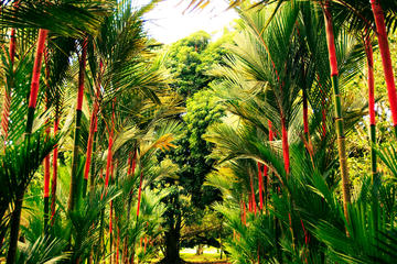 Jardim Botânico Lancetilla