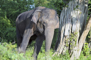 Udawalawe National Park