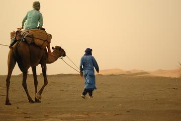 Desert Tours from Marrakech