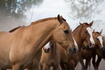 Don Silvano Ranch