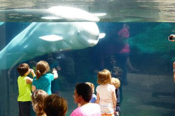 The Best Mystic Aquarium Tours Trips Tickets