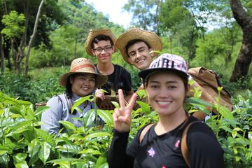 Araksa Tea Plantation