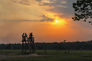 Sauraha Village