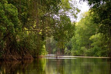 Caroni Swamp