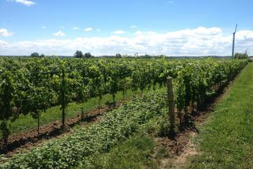 Pondview Estate Winery, Niagara Falls