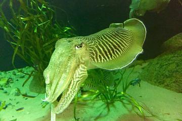 Oresund Aquarium (Oresundsakvariet)