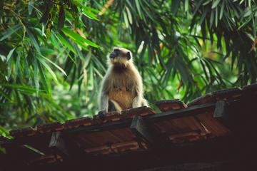 Wildlife Near Goa