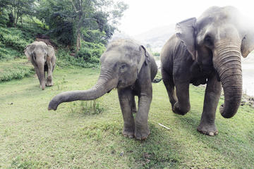 Baanchang Elephant Park, Northern Thailand