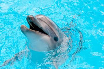 Sealanya Dolphinpark