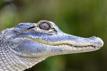 Wild Florida Wildlife Park, Orlando