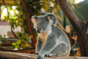 Cleland Wildlife Park, South Australia
