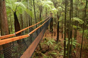 Whakarewarewa Forest