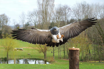 International Centre for Birds of Prey, South West England