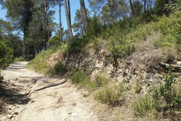 Collserola Natural Park (Parc de Collserola)