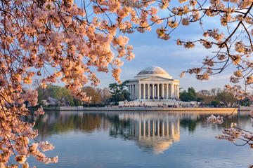 How to Experience Cherry Blossom Season in Washington DC
