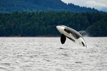 Whale Watching Tours in Vancouver