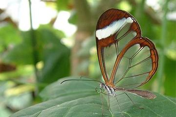 Fort Lauderdale Butterfly World