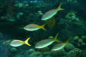 Florida Aquarium, Florida